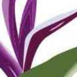 cropped-envision-flower-small.jpg