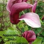 magnolia2 copy